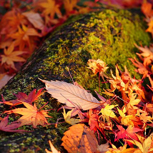秋に着る着物おすすめ